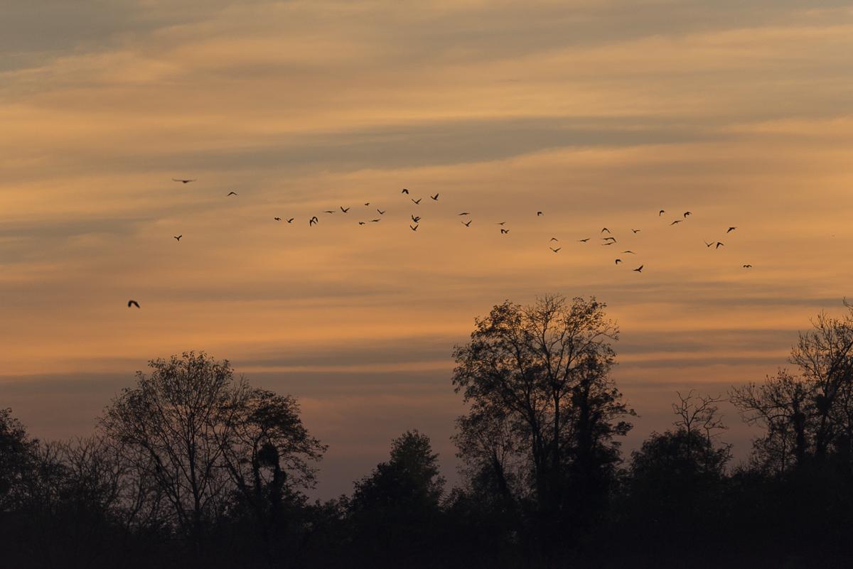 Paysage Coucher de soleil, un vol de corneilles passe dans le ciel