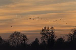 Septembre 2014 Coucher de soleil avec un vol de corneilles dans le ciel