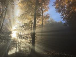 Octobre 2015 Paysage de sous bois en contre jour en automne