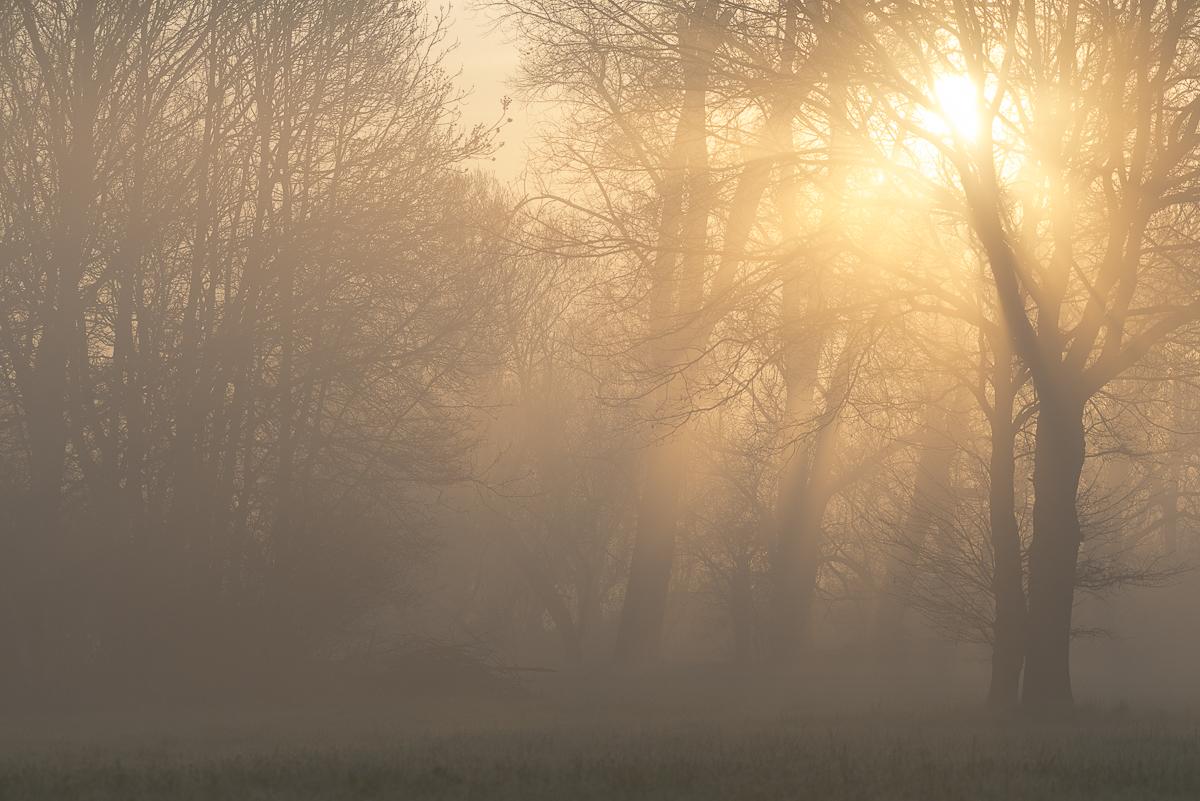 Soleil brumeux à travers les arbres