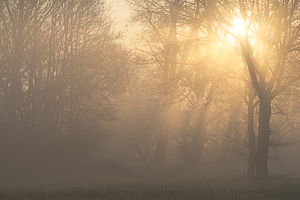 Mai 2016 Lever de soleil dans la brume