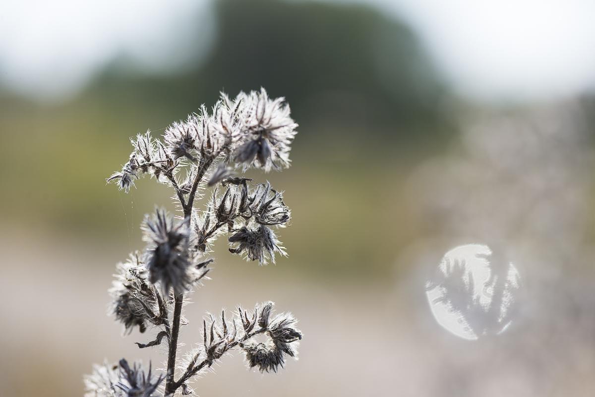 Paysage Plante sèche et son halo en macro